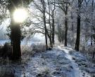 Winter bos
