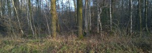 Flipsweg waar zit de fazant